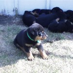 All these puppies loved shade
