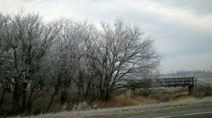 Frost trees winter
